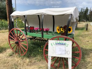 Flowers, covered wagon, Stand, whidbey island