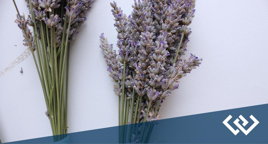 Lavender Wind, Coupeville