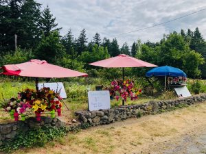 Whidbey Island, Flower stands, Honesty stands, flowers, garden