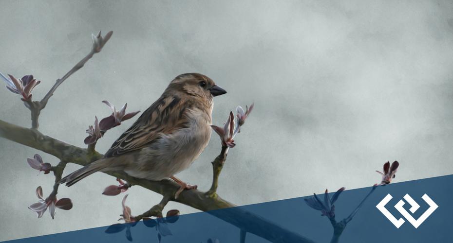 Bird in the Hand Festival, Langley, Whidbey Island, Washington, Birds