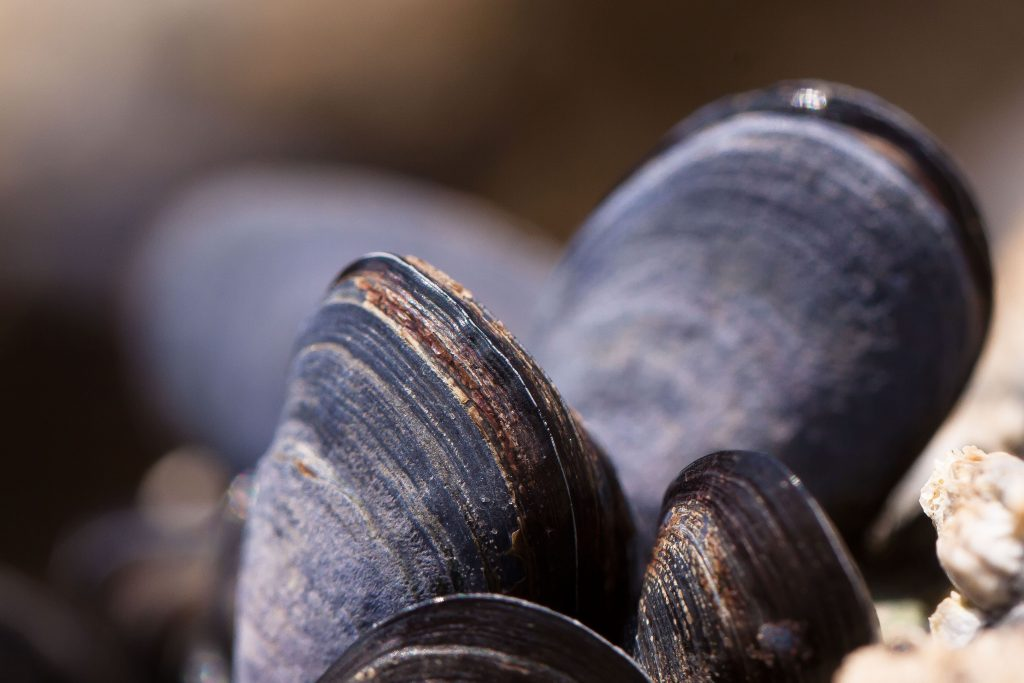 mussel, seafood, whidbey Island, events, local