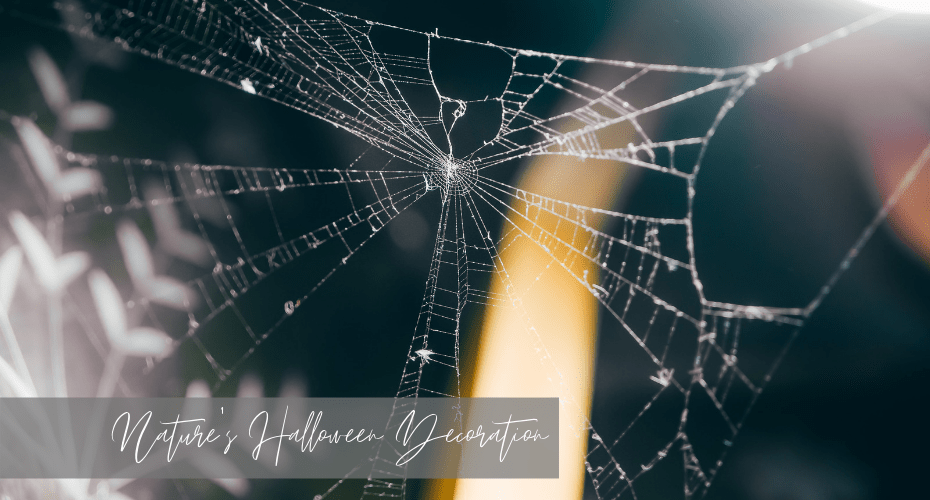 Nature's Halloween Decoration, Spiders, webs, october, fall, halloween , whidbey, windermere real estate