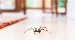Spider, creepy crawling spider