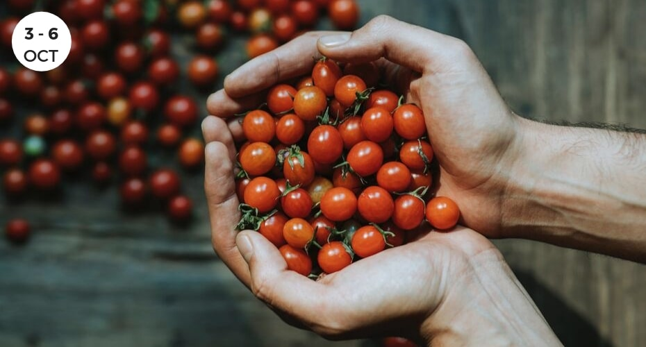 Tomatoes held in hands, Harvest, agriculture, whidbey island, festival