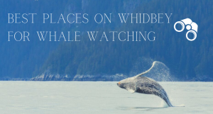 Whidbey Island, Whale viewing, best places to spot a whale