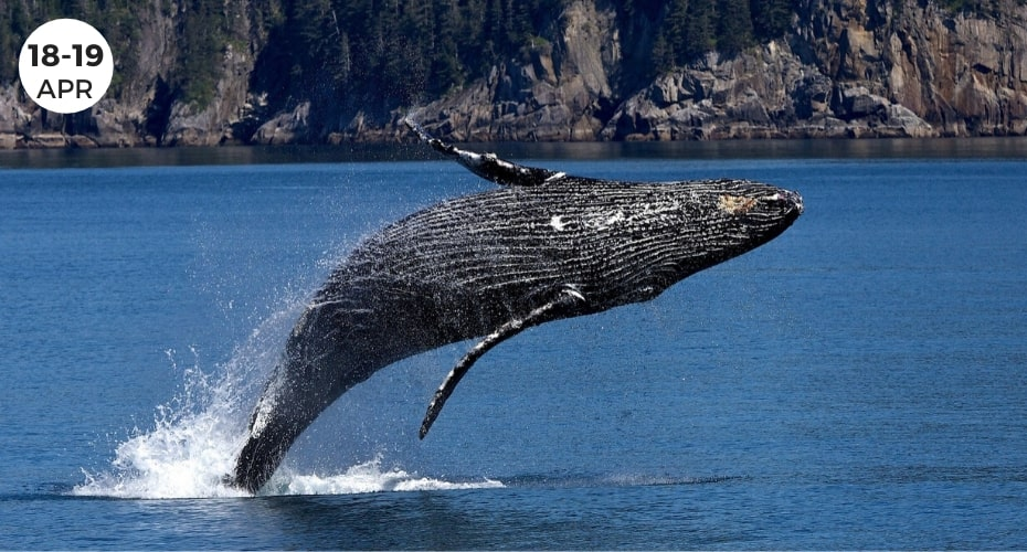 Whales, whidbey Island, Majestic Creatures