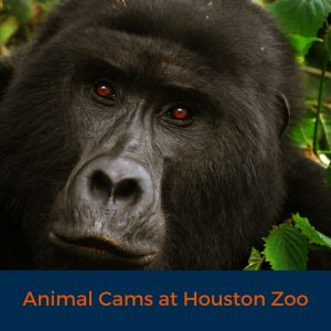 Animal Cams at Houston Zoo