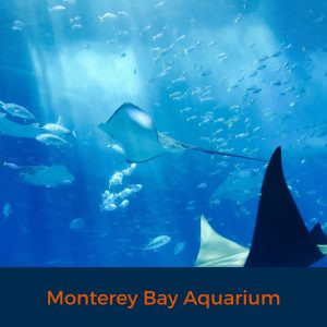 Monterey Bay Aquarium, Aquarium, Virtual tour, Stay Home, Learn from Home, Watch from afar