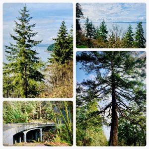 Chuckanut Drive, View, Trees, Ocean, Windermere, Simona Groves