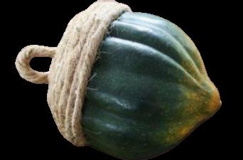 Acorn Squash,