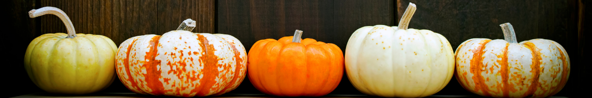 Where to buy your pumpkins on Whidbey, Whidbey island, Annie cash